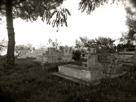 On one of my village runs, I stumbled upon this cemetery in an olive grove on top of a hill. Stunning!